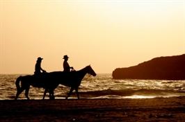 רכיבה רומנטית, טיול סוסים, סוסים