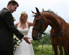 הצעת נישואין, רכיבה רומנטית, טיול סוסים רומנטי